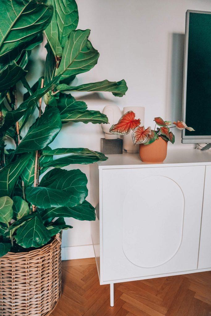 sandra stoicovici sfaturi plante little stories of my life at home